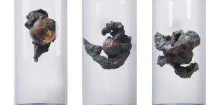 Вируси. 2011, бронз, стъкло, плексиглас, три компонента, 70/65/ø35 см Viruses. 2011, bronze, glass, plexiglass, three components, 70/65/ø35 cm